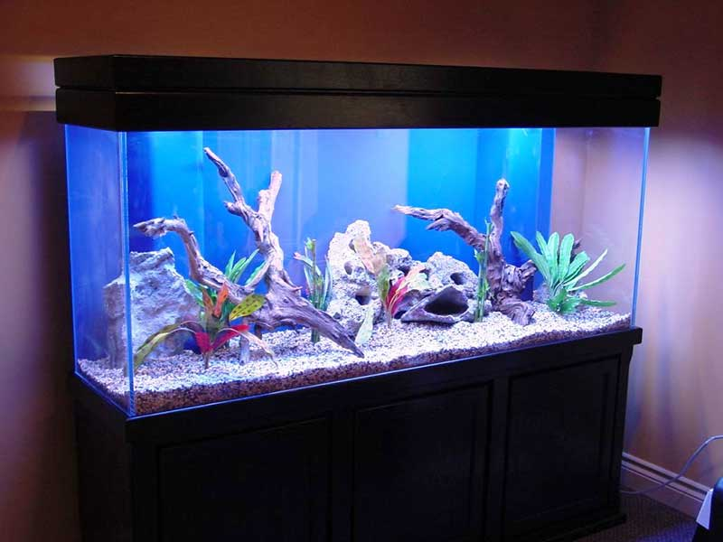 cool-fish-tank-decorations