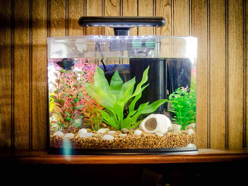 fish-tank-ideas