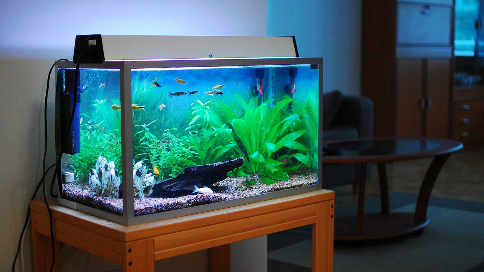 the best home aquariums of 2018 come into the water