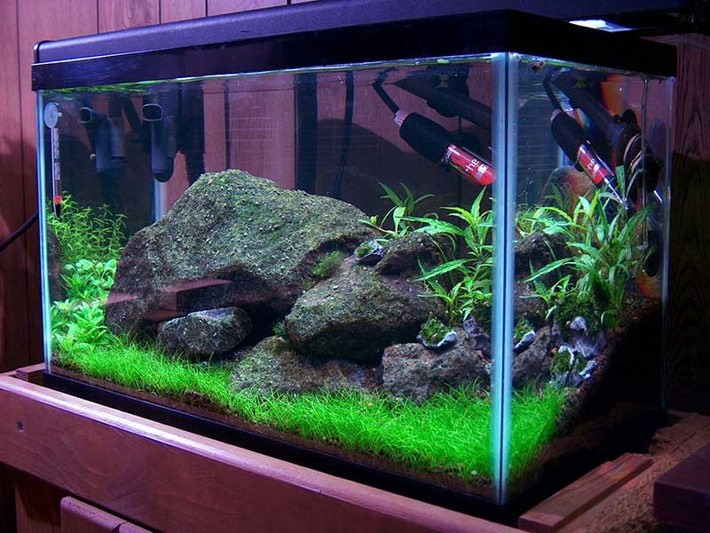 You 39 re not crazy why use a freshwater sump for Freshwater fish tank setup