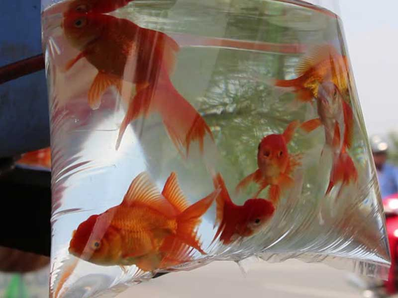 fish-in-bag