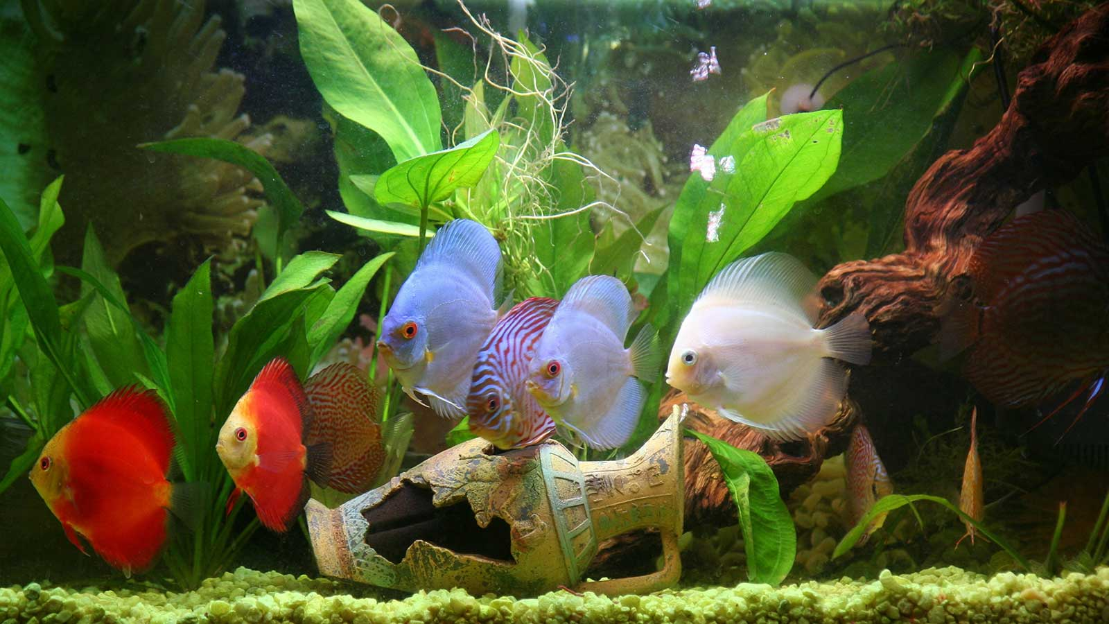 Flipper Fun: The Best Tropical Fish For Beginners